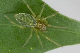 educated spiders album imgur