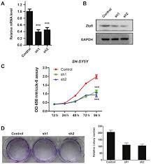 Knockdown of zinc transporter ZIP8 expression inhibits neuroblastoma
