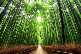 beautiful trees bamboo preview
