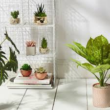 primark faux plant collection