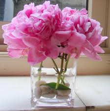 peonies flowers peony the secret language of flowers
