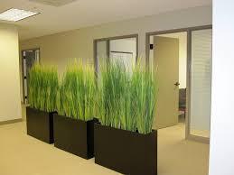 indoor plants as room dividers 4 indoor plants pinterest inside