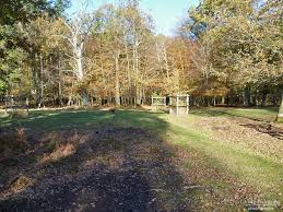 knightwood oak new forest national park forest in photographs