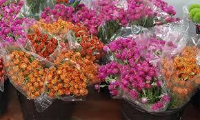 wholesale fresh flowers gomphrena fresh flowers catalog flora export s g israel ltd