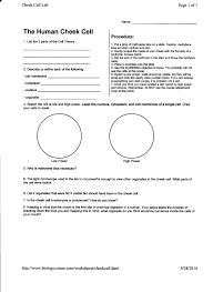 week 7 cell lab and cystic fibrosis case study mrborden u0027s