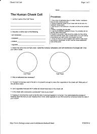 Bill Nye Matter Worksheet Mrborden U0027s Biology Rattler Site Room 664 Biology Anatomy