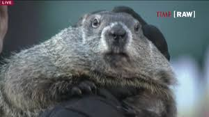 groundhog day punxsutawney phil predicts an early spring