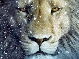 imágenes sorprendentes para whatsapp sorprendente león en la nieve imagen 5719 imágenes cool