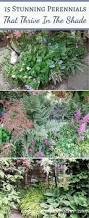 Flower Boxes That Thrive In by Full Sun Perennials 8 Low Maintenance Plants That Thrive In The
