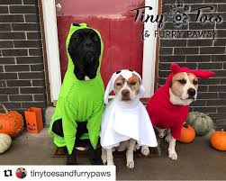 Halloween Costumes Small Dogs 33 Pets Halloween Costumes Flaunt Unique Halloween Style