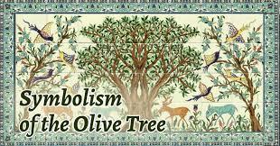 tree symbolism olive tree symbolism