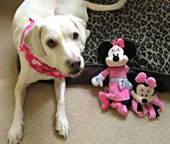 daisy visit minnie mouse disney toys dogs
