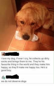Orange Dog Meme - 25 best memes about love my dogs love my dogs memes