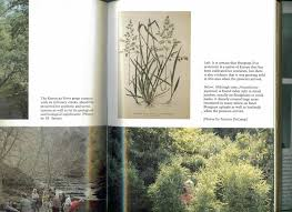 native plants of kentucky the kentucky bluegrass country georgiabeforepeople