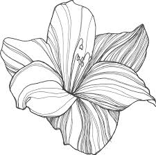 line drawing of a flower free download clip art free clip art