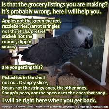 Parrot Meme - 238 best companion parrots images on pinterest parakeets animal