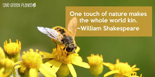 quotes about reading shakespeare 15 quotes about nature that will remind you why we need to keep