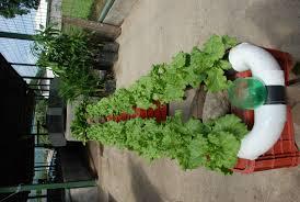 indoor vegetable gardening lighting fresh indoor vegetable