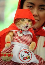 lobster halloween costumes 32 purr fectly cute halloween costumes for pets to look spooky