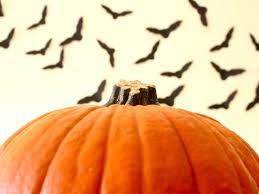 flying bats hgtv