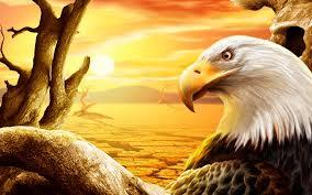 eagle wallpaper images pc laptop eagle photos in fhdkkc hd