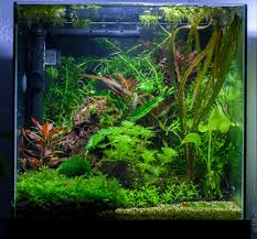 Aquascape Fish Dirted Desk Cube 4g Uber Pic Heavy The Planted Tank Forum