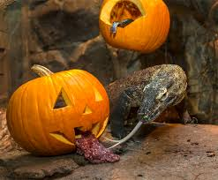no tricks just treats for komodo dragon at the san diego zoo