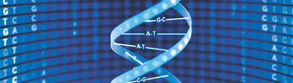 dna mapping genome mapping genetic analysis millennium science