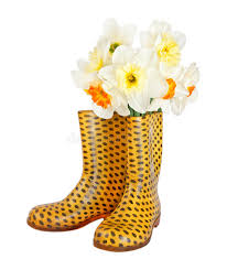 yellow boots s narcissus flowers in children s yellow boots stock photos image