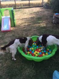 5 halloween puppy party games u2013 dezithinks