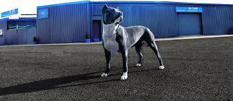 blue dog k9 care we u0027re man u0027s best friends best friend