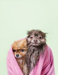 Make Bathtime Fun For Your Dog Adorable Photos Of Wet Dogs Will Make You Ponder The Meaning Of