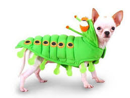 Funny Dog Costumes Halloween 31 Dog Costumes Images Dog Costumes Pet