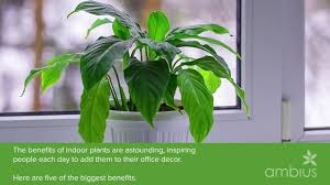 benefits of houseplants the 5 benefits of indoor plants for your business youtube