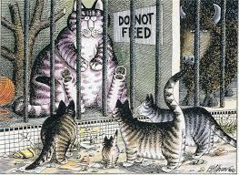 50 best kliban images on kliban cat cat stuff and cats