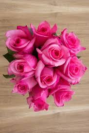 bulk roses topaz hot pink hot pink roses pink bulk roses