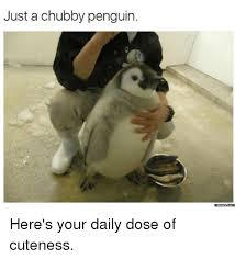 Cute Penguin Meme - just a chubby penguin memes com here s your daily dose of cuteness