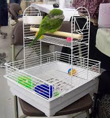 vital l full spectrum light for birds 11 best natural herbal supplements remedies for parrots birds images