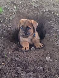 digging holes is very tiring aww