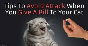 Sneaky Cat Meme - easiest way to give your cat a pill