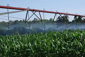 irrigated corn irrigated delaware corn extension udel edu ag weed science flickr