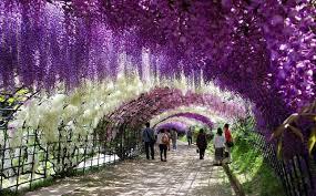 flower places interesting places japan let s go for a trip