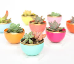 Ceramic Succulent Planter by Best 10 Succulent Planters Ideas On Pinterest Succulent Wall