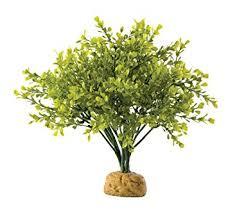 amazon com exo terra boxwood bush terrarium plant pet habitat