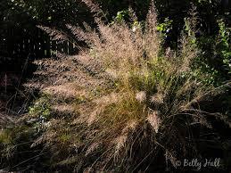 native grass plants native plants fall betty hall photography