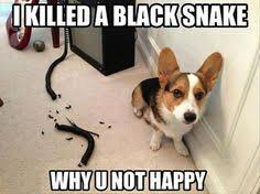 Funny Animal Memes Tumblr - 1000 images about funny animal memes on pinterest animal memes