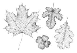 how to draw a leaf step by step canberra website design