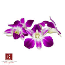 purple orchids edible orchids in bulk karma orchids marx foods