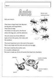 insects worksheets free insects picture dictionary worksheet