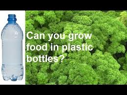 can you grow vegetables in plastic drink bottles youtube